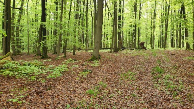fruehlingswald-optimal-fuer-naturcoaching
