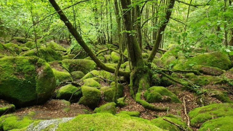 wunderschoener-wald-optimal-fuer-naturcoaching